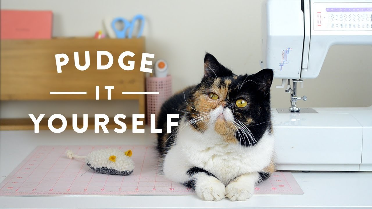 Pudge it Yourself: Weekly DIY Crafts with Pudge the Cat