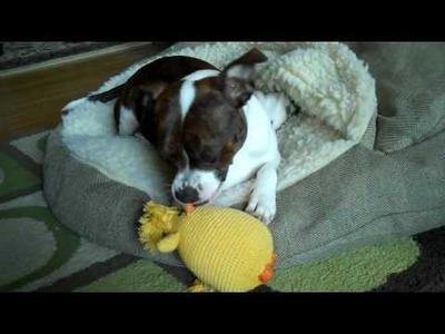 Martha Stewart Crochet Toy