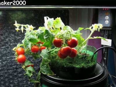 2 Liter Bottle Self Watering Planter - Quick & Easy DIY