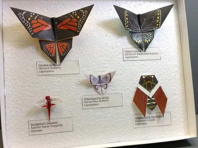 Free Origami Paper - Print Your Own! - Origami Bug Collection