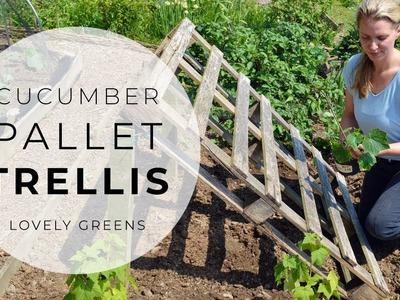 Cucumber Pallet Trellis & new plants for the Veggie Garden