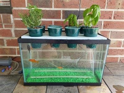 My DIY Aquaponics Aquarium Project