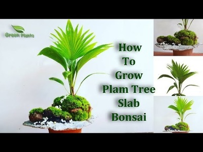 How To Grow Palm Tree Bonsai | palm Bonsai Slab Planting | Bonsai Guide for Beginners.GREEN PLANTS