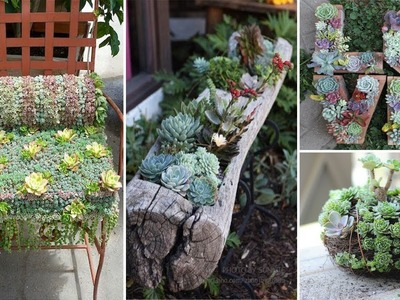 120 Ideas for Succulents in Containers | You Must Know | DIY Garden