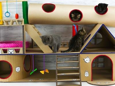 DIY Modular Cat House for Four Little Kittens