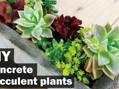 【コンクリートDIY】多肉植物で彩る.Use succulent concrete to color succulent plants concrete ART