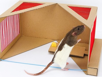 How to Make  Rat Trap  from Cardboard