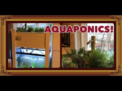 Aquaponics System In My Living Room - DIY Grow Bed!