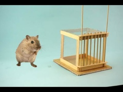 How to Make Mouse Trap