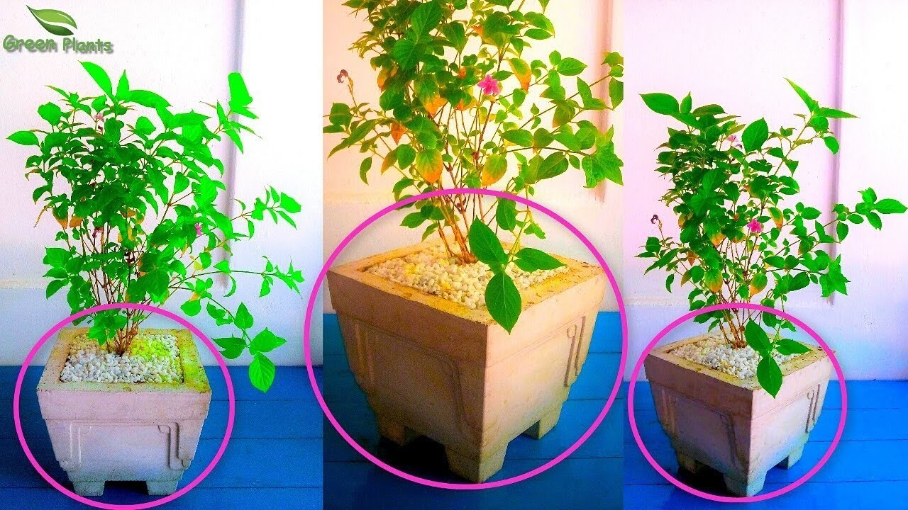 How to Make Big Cement. concrete Pot at Home Under $ 0.30 or 20 INR.GREEN PLANTS