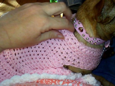 I Crochet a dog sweater dress for my Chihuahua