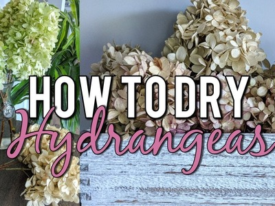 How to Dry Hydrangeas in Water Naturally-Beautiful Dried Flower Bouquet DIY!