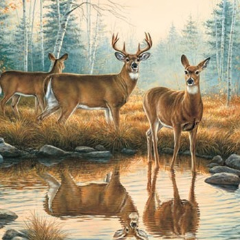 CRAFTS Deer Reflections Cross Stitch Pattern***LOOK***