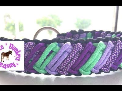 "Five colour  Zed  (""Z"") pattern paracord dog collar"