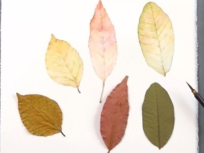 Learn How to Paint Autumn Leaves Colors for Beginners