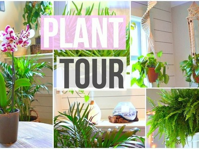 My House Plant Collection! 2018