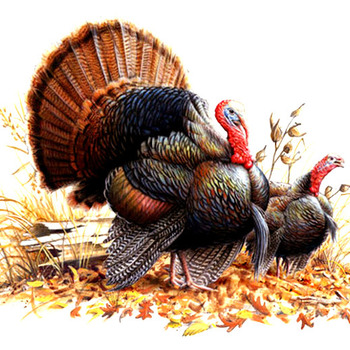 WiLd Turkey Pair Cross Stitch Pattern***LOOK***