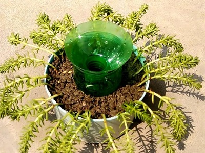 Self watering system for plants | Self watering pot for plants