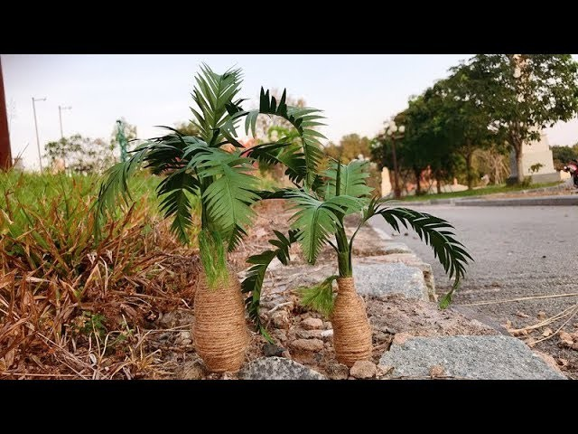 ABC TV | How To Make Hyophorbe Lagenicaulis Plant Paper - Craft Tutorial