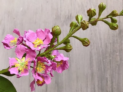 ABC TV | How To Make Queen's Crape Myrtle Flower With Shape Punch - Craft Tutorial