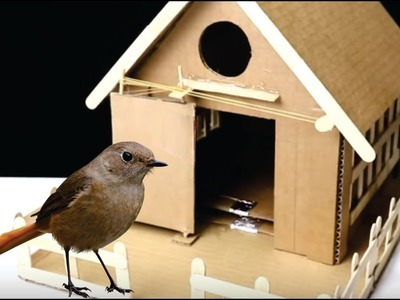 How to Make Bird Trap House Technology