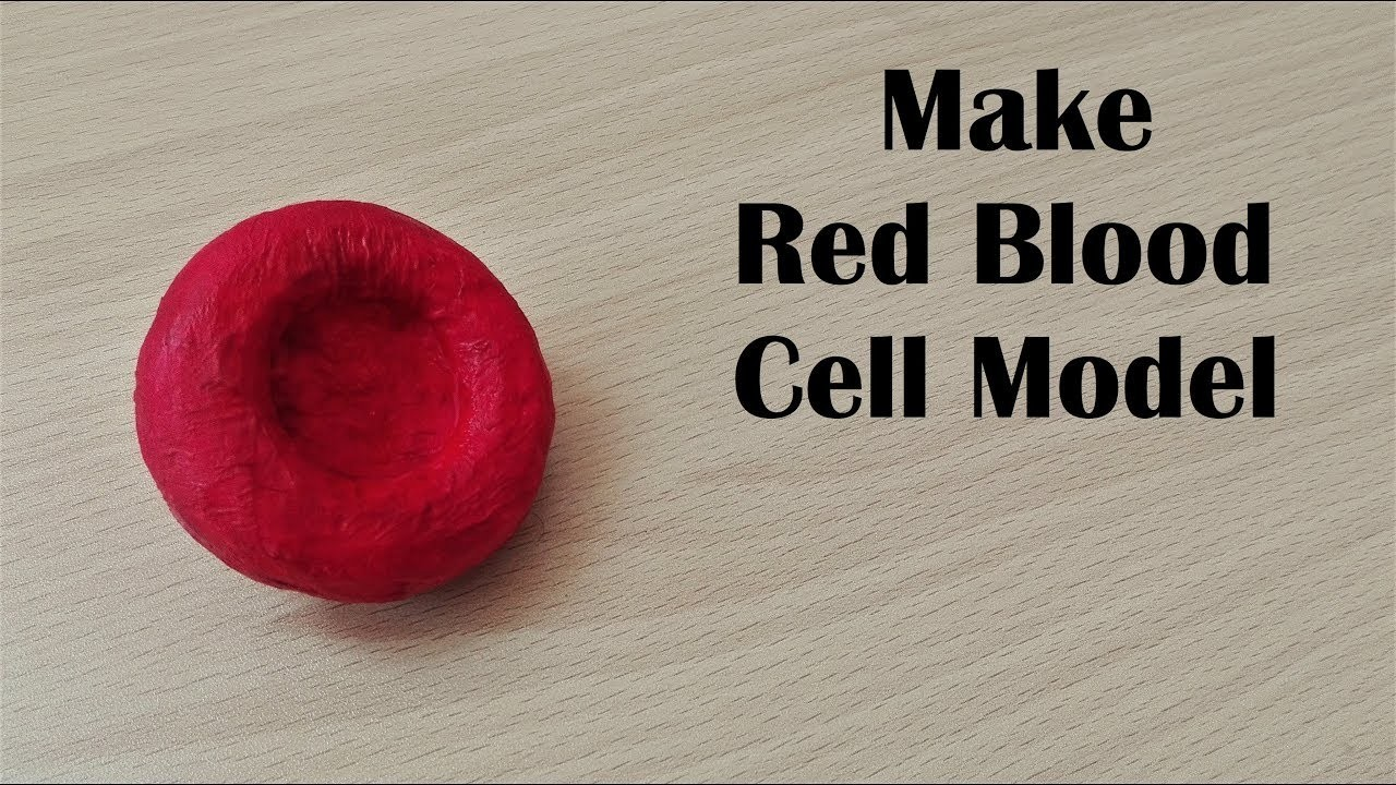 How To Make Red Blood Cell Model 3d Thermocol Styrofoam