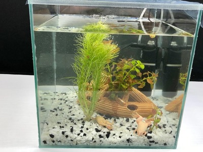 How to Make Amazing Frogs Aquarium at Home