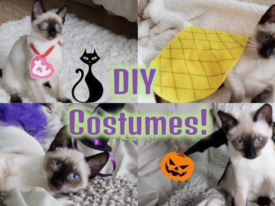 DIY Halloween Costumes For Your Cat!