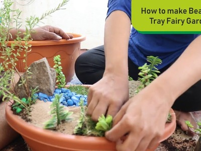 How to Make Beautiful Fairy Tray Garden step by step with DIY Ideas Indoor Plants for beginners