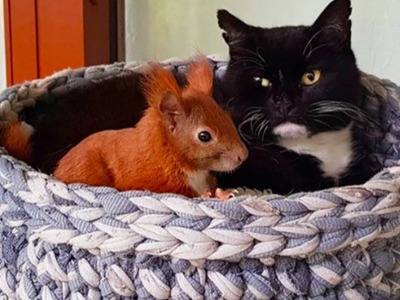 Man That Introduces Curious Cat To Weird Squirrel From His Yard Watches As Pure Magic Unfolds