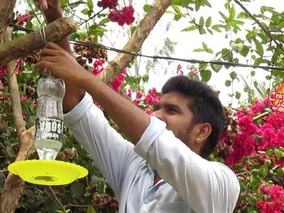 How To Make A Bird Water Feeder | ChaliVendram | Crazy Crafts