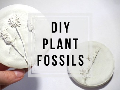 DIY Plant Fossils ???? Plaster Flowers | How to Cast Flowers. Plants | Craft Ideas by Fluffy Hedgehog
