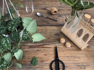 Home visit: how to set up a plant station