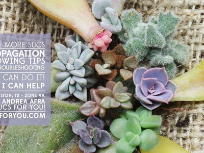 Succulent Propagation- Growing Tips and Troubleshooting with Sucs for You