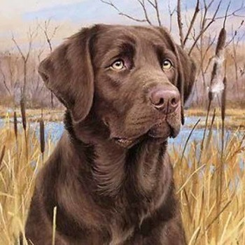 CRAFTS ChocoLate Lab Cross Stitch Pattern***L@@K***