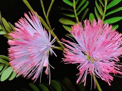 ABC TV | How To Make Calliandra Surinamensis Paper Flower - Craft Tutorial