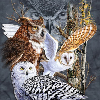Owls Of The World Cross Stitch Pattern***LOOK***X***INSTANT DOWNLOAD***