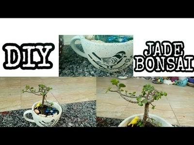 DIY.Jade Bonsai.How To Make Bonsai In Ceramic Cup