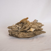 Driftwood Sea Shell Art