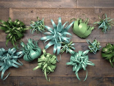 Who Knew Air Plants Could be so Easy to Make? Take a Look at our New Frosted Paper Kit!