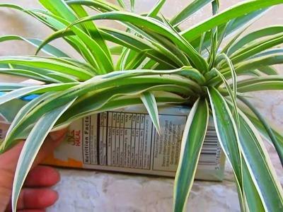 Home Made Planter Ideas   DIY Ideas For Gardening   Urdu.Hindi