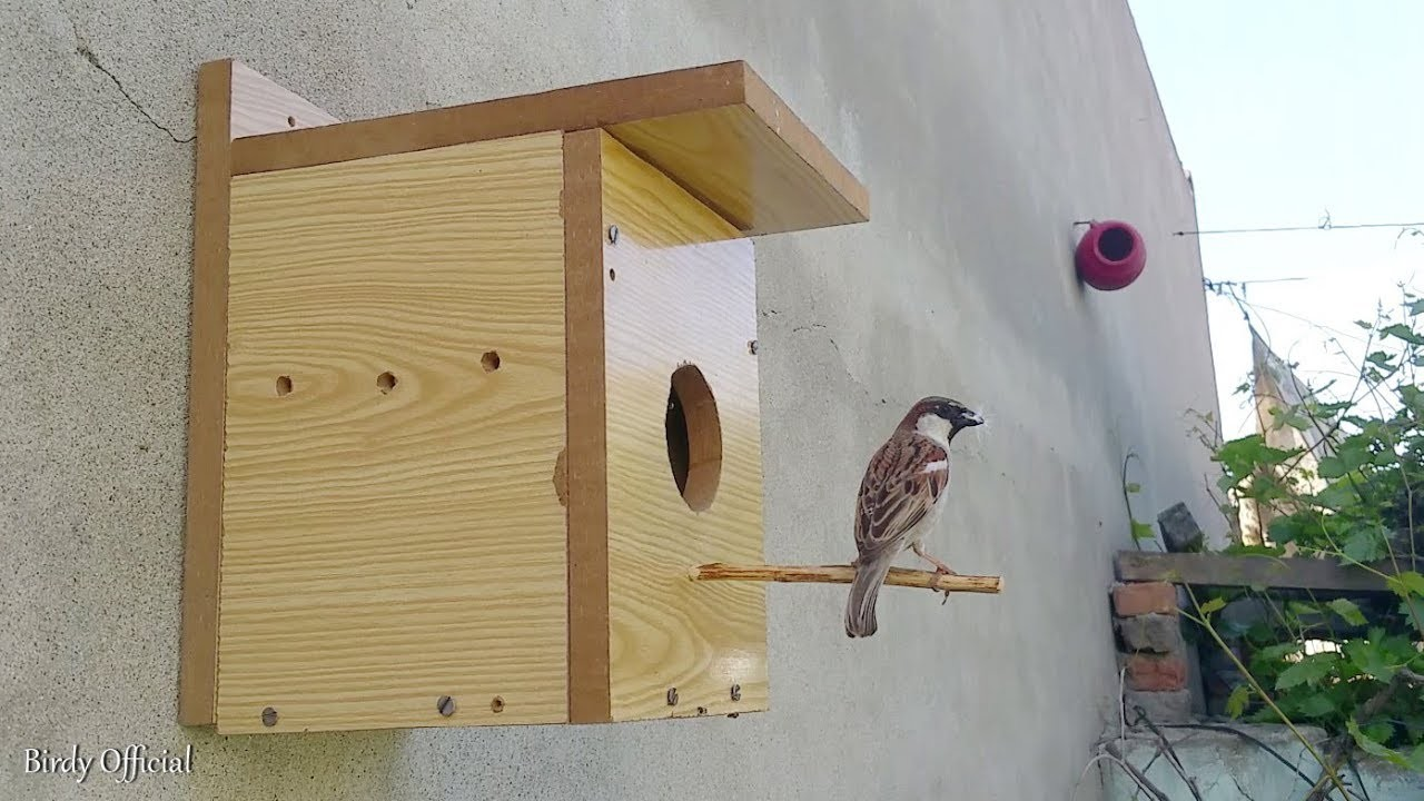 Bird Nesting Box   How To Build A Bird House Out Of plywood At Home