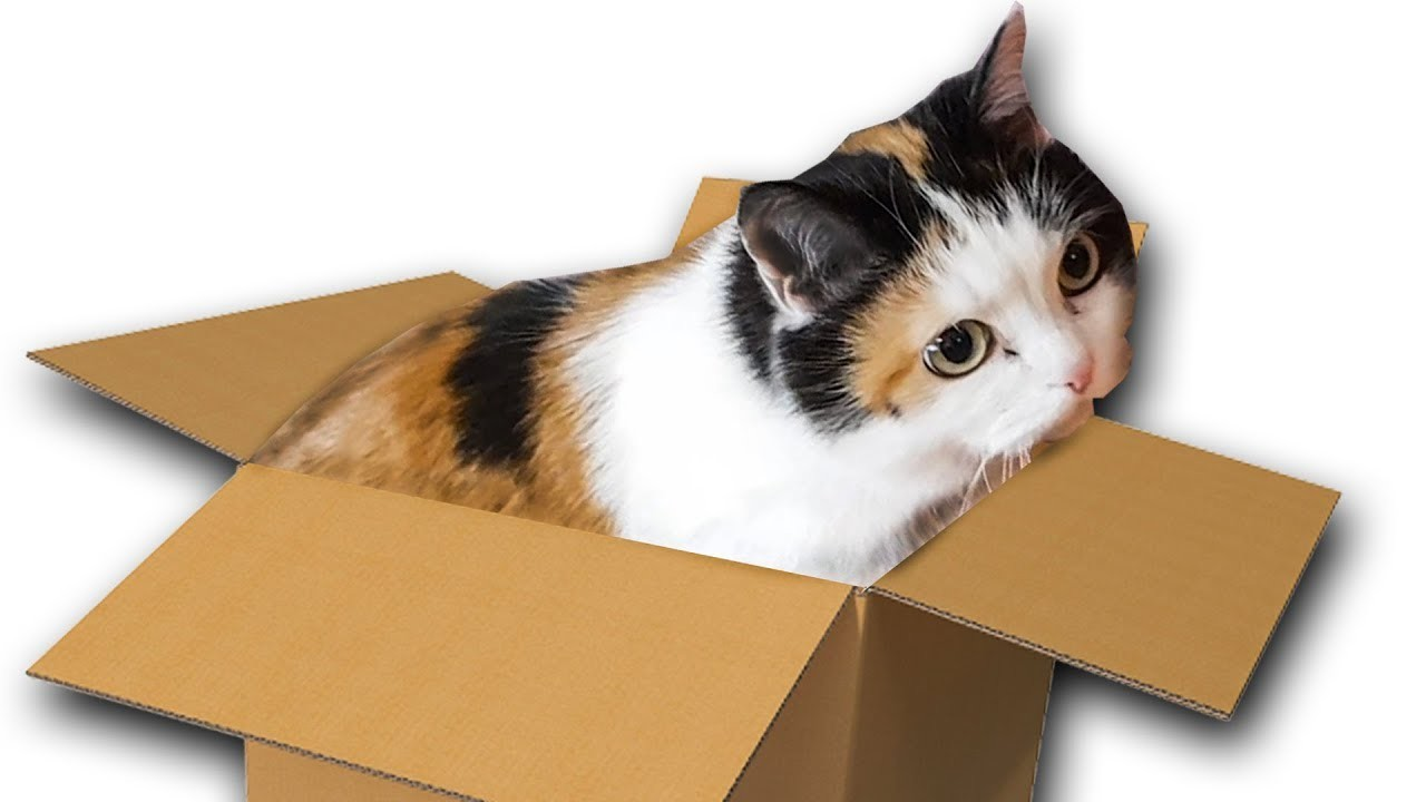 DIY Cat House from Cardboard - Making a house for Cat