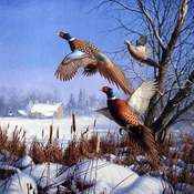 Pheasents In Flight Cross Stitch Pattern***LOOK***