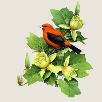 CRAFTS ScarLet Tanager Bird Cross Stitch Pattern***LOOK***