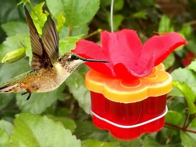 Best Hummingbird Feeder Homemade - Simple Craft Idea