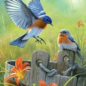 CRAFTS Humming birds With Iris Cross Stitch Pattern***L@@K***