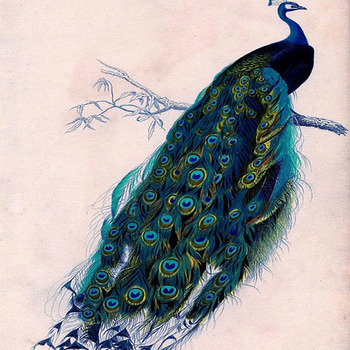 CRAFTS Beautiful Peacock Cross-Stitch Pattern***LOOK****Buyers Can Download Your Pattern As Soon As They Complete The Purchase