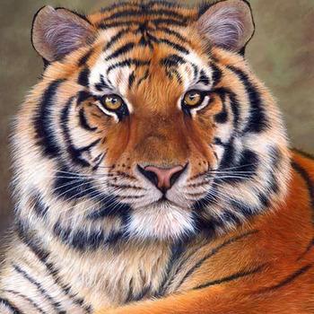 CRAFTS Siberian Tiger Cross Stitch Pattern***L@@K***