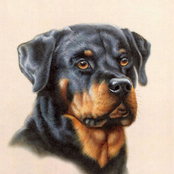 CRAFTS Rottweiler Dog Cross Stitch Pattern***L@@K***